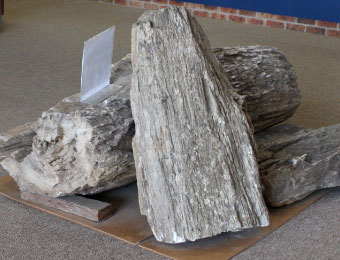 Petrified rock display at the exhibition centre